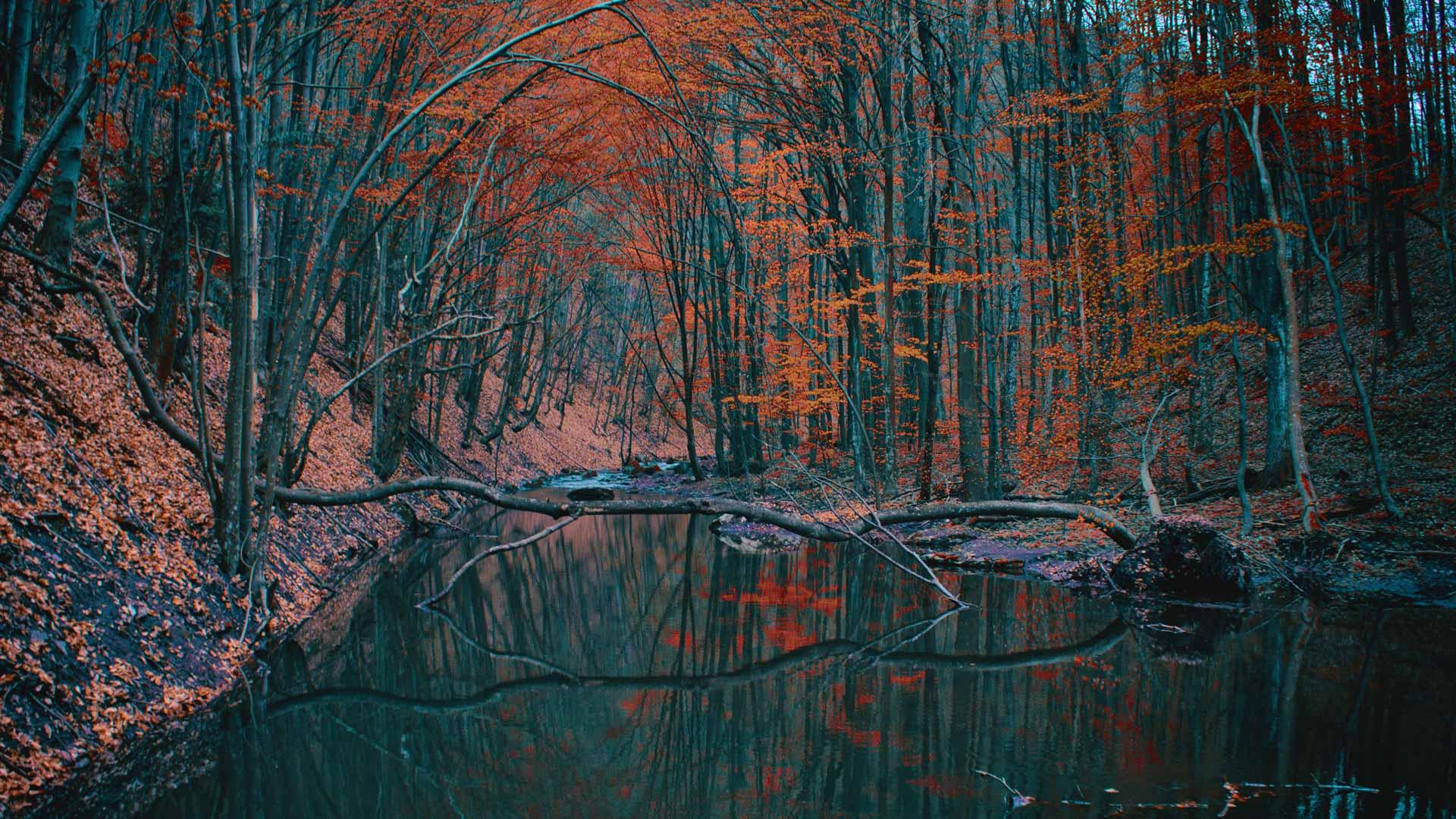 bucharest autumn river